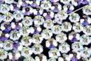 Swarovski, marguerite flower, AB, 6mm - x10