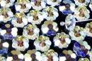 Swarovski, marguerite flower, aurora borealis, 14mm - x2