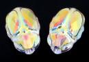 Swarovski, scarabeus bead aurora borealis, 12mm - x1